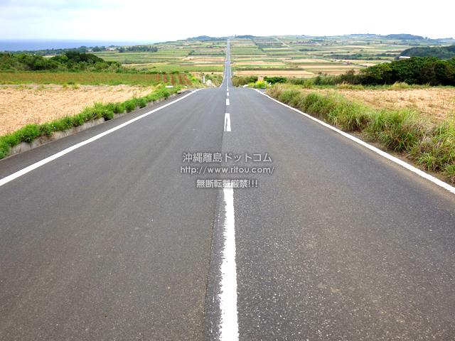 喜界島の喜界島シュガーロード/サトウキビ畑の一本道