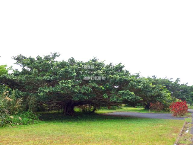 喜界島の百之台公園