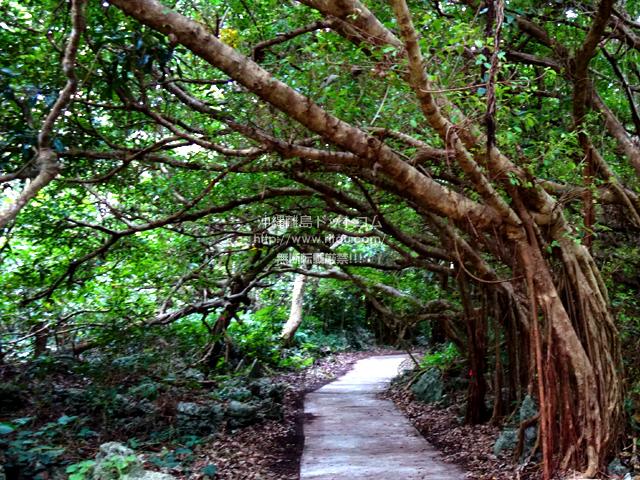 喜界島の荒木鍾乳洞/大岩
