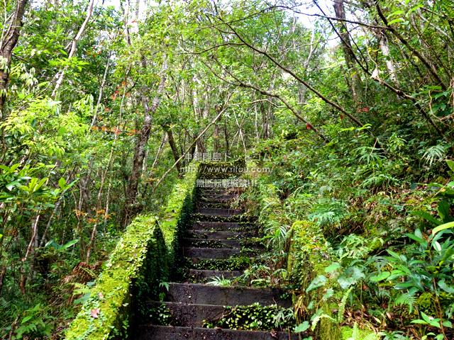 奄美大島のアランガチの滝