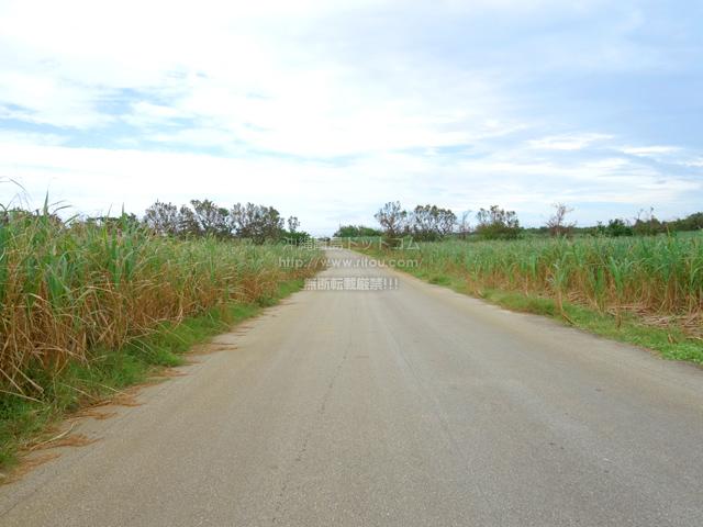 南大東島の南大東島西側の道