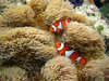 魚たち ギャラリー