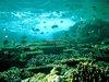 珊瑚礁 ギャラリー