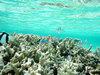 海の水 ギャラリー