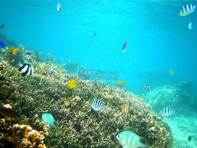 小魚多い南部の海(南部エリアの壁紙/写真)