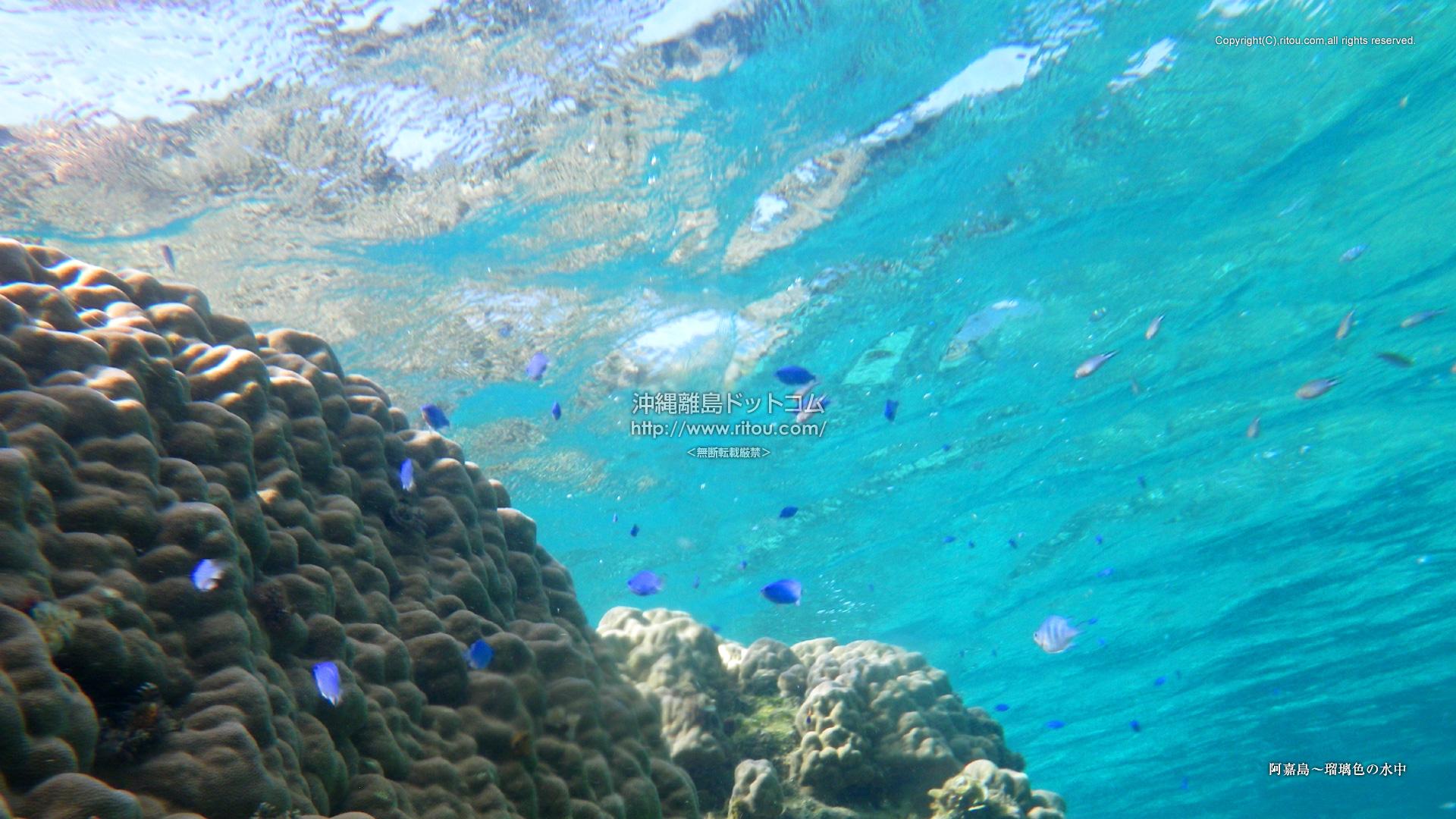 阿嘉島〜瑠璃色の水中