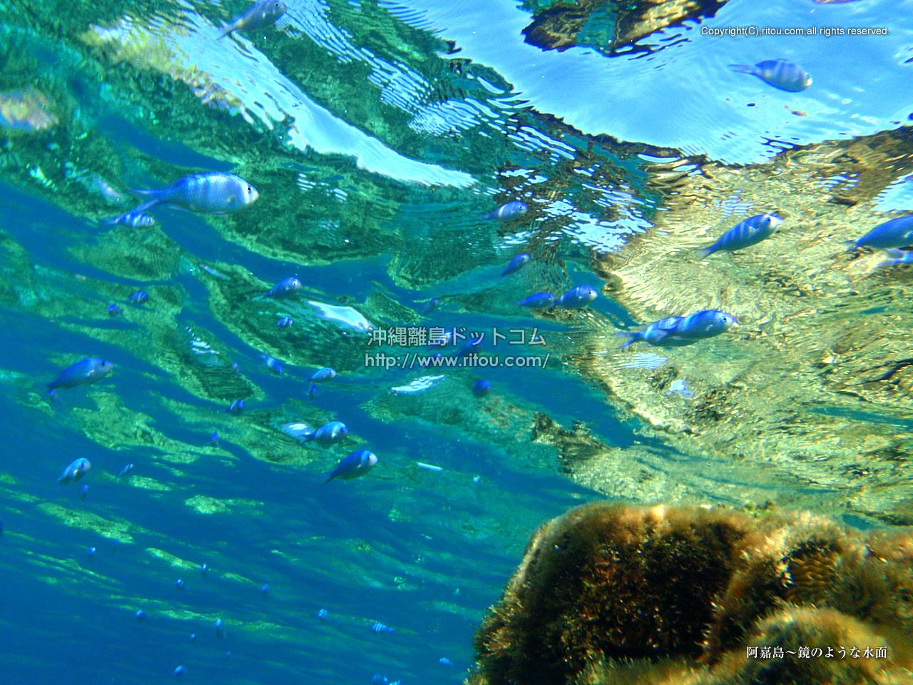 阿嘉島〜鏡のような水面