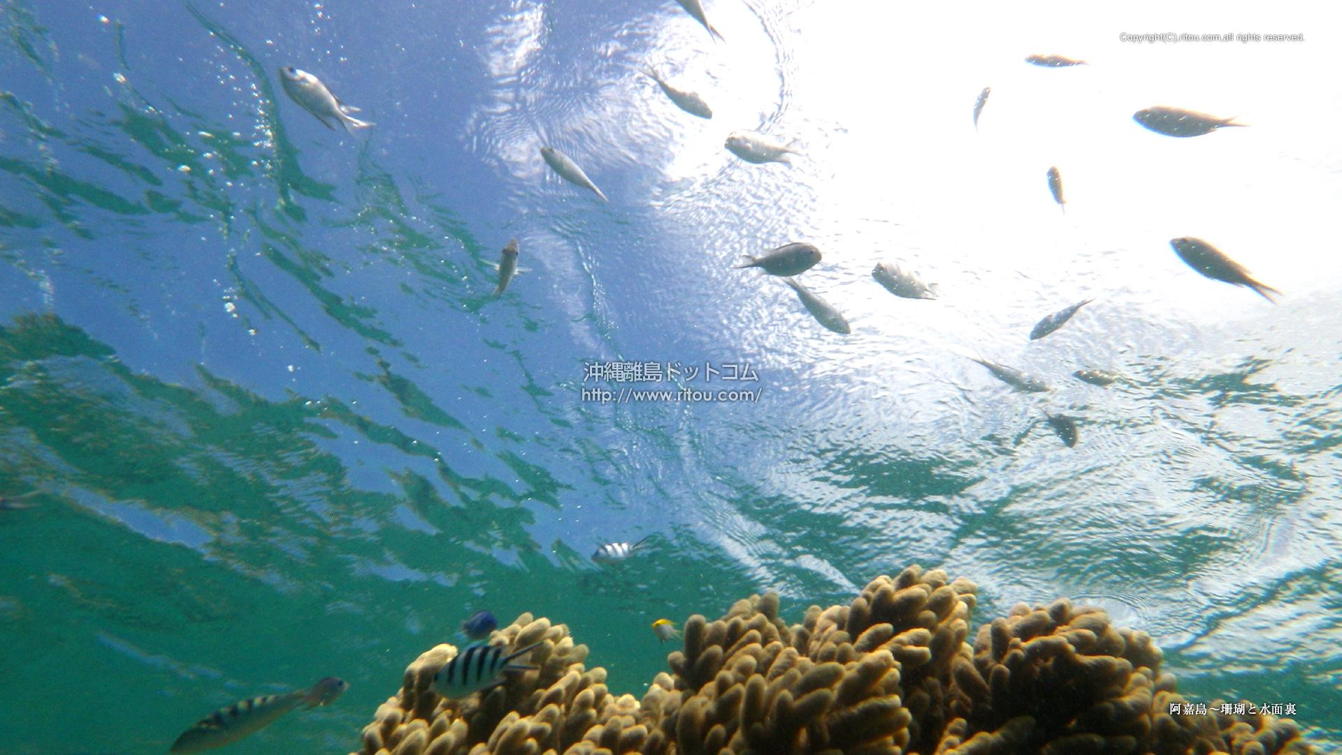 阿嘉島〜珊瑚と水面裏
