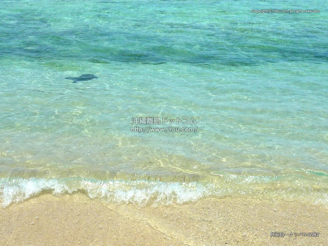 阿嘉島〜クシバルの海2