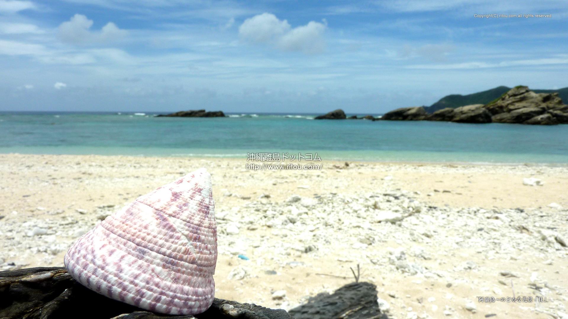 阿嘉島〜のどかな光景「貝」
