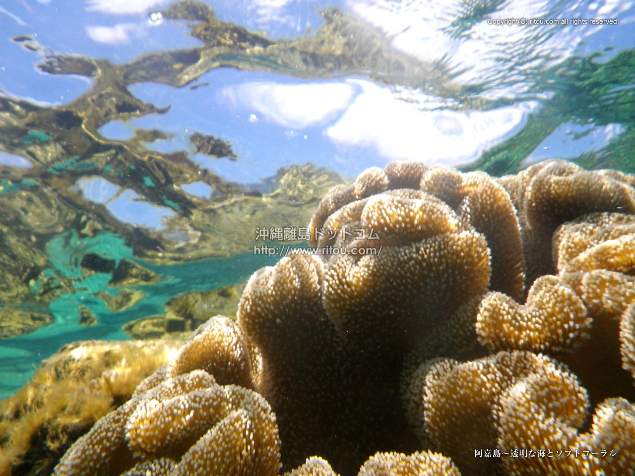 阿嘉島〜透明な海とソフトコーラル