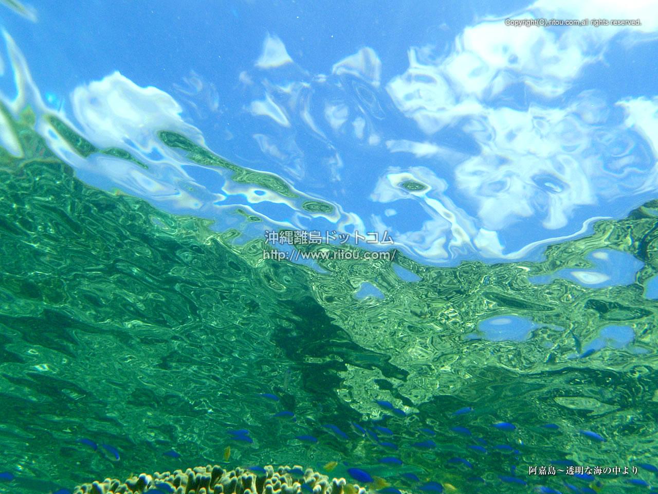 阿嘉島〜透明な海の中より