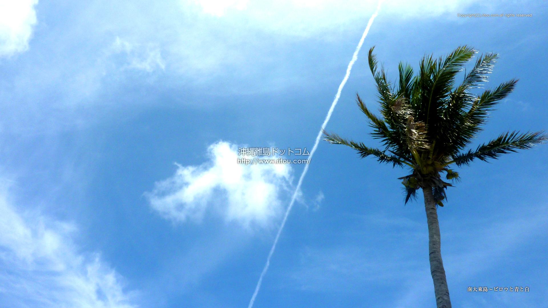 南大東島〜ビロウと青と白