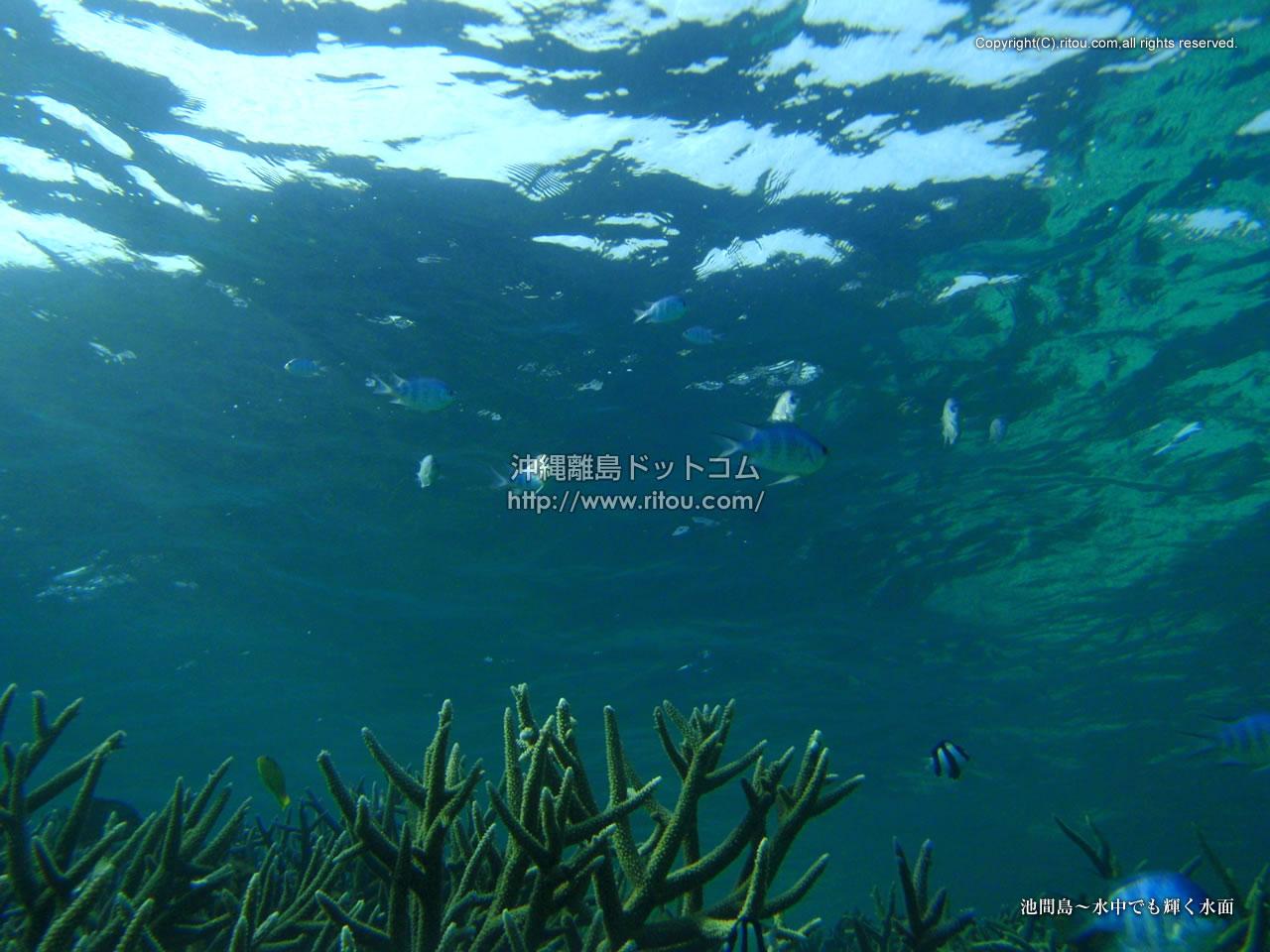 池間島〜水中でも輝く水面