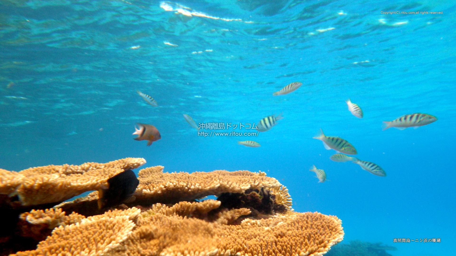 波照間島〜ニシ浜の珊瑚