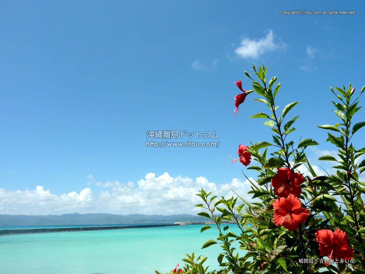 鳩間島 青い海と赤い花 沖縄離島の壁紙