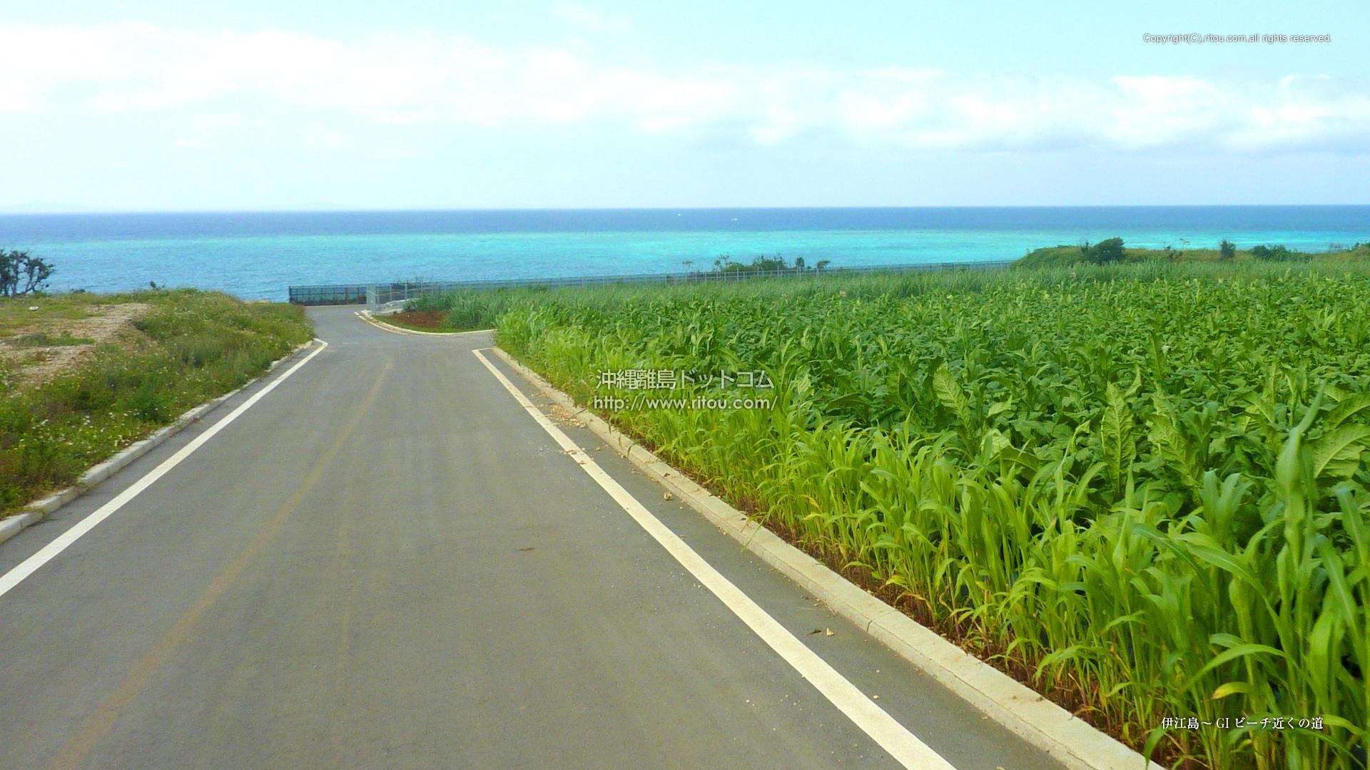 伊江島〜GIビーチ近くの道
