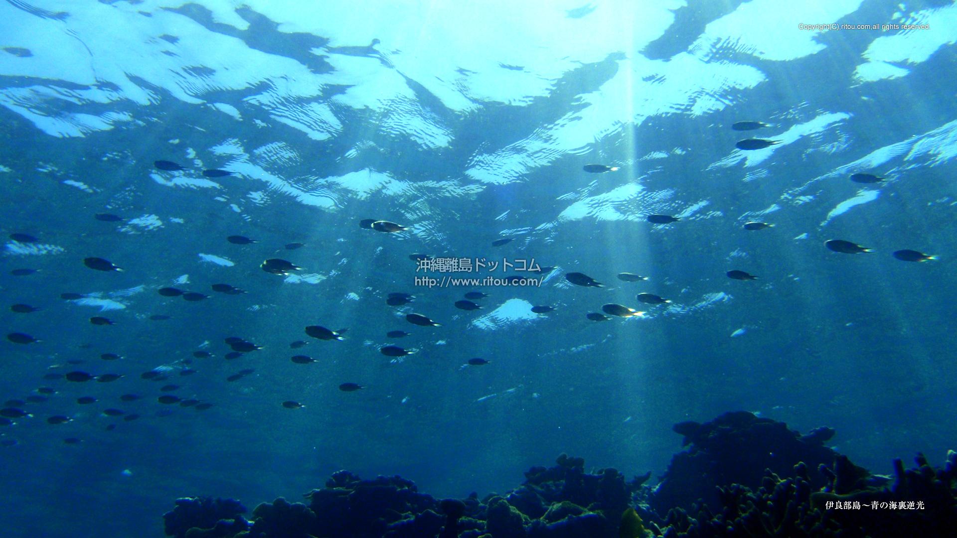 伊良部島〜青の海裏逆光