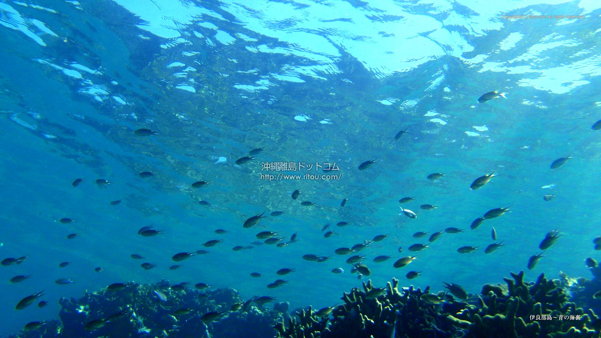 伊良部島〜青の海裏
