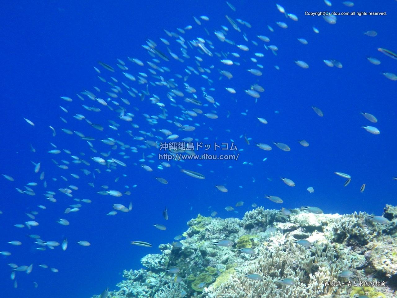 西表島〜青と水色の共演