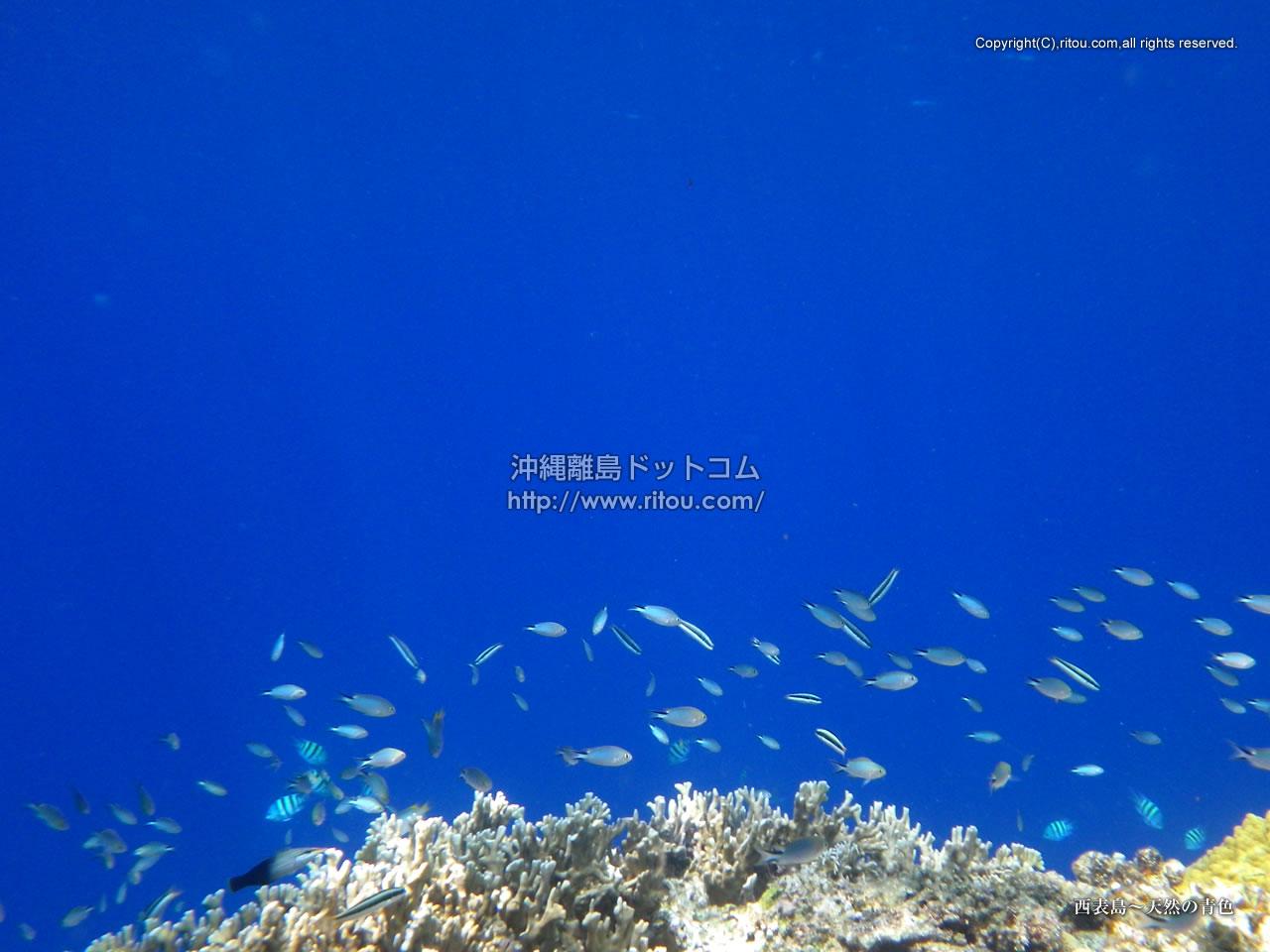 西表島〜天然の青色