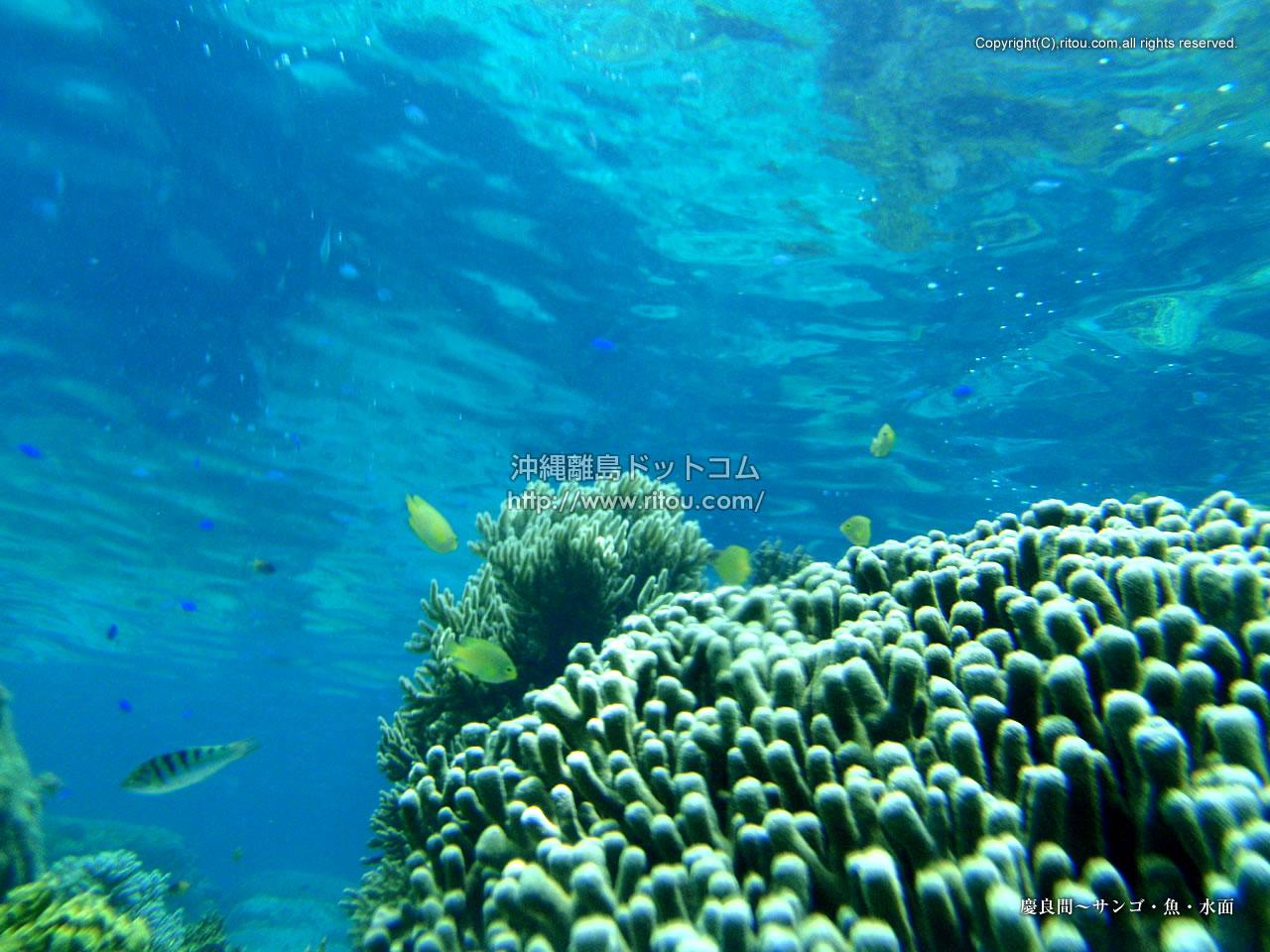 慶良間〜サンゴ・魚・水面