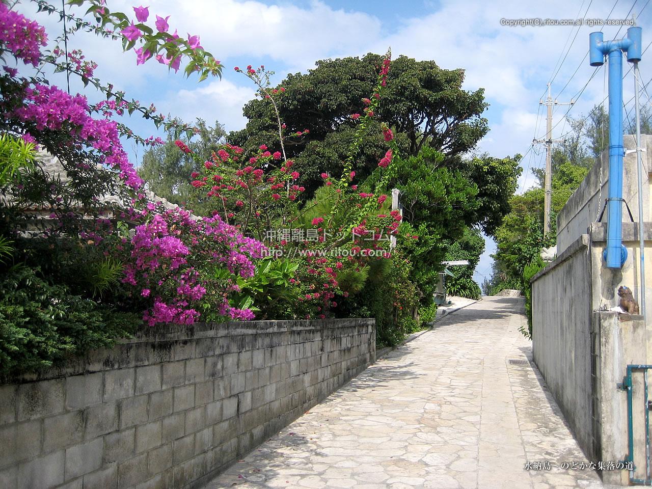 水納島〜のどかな集落の道