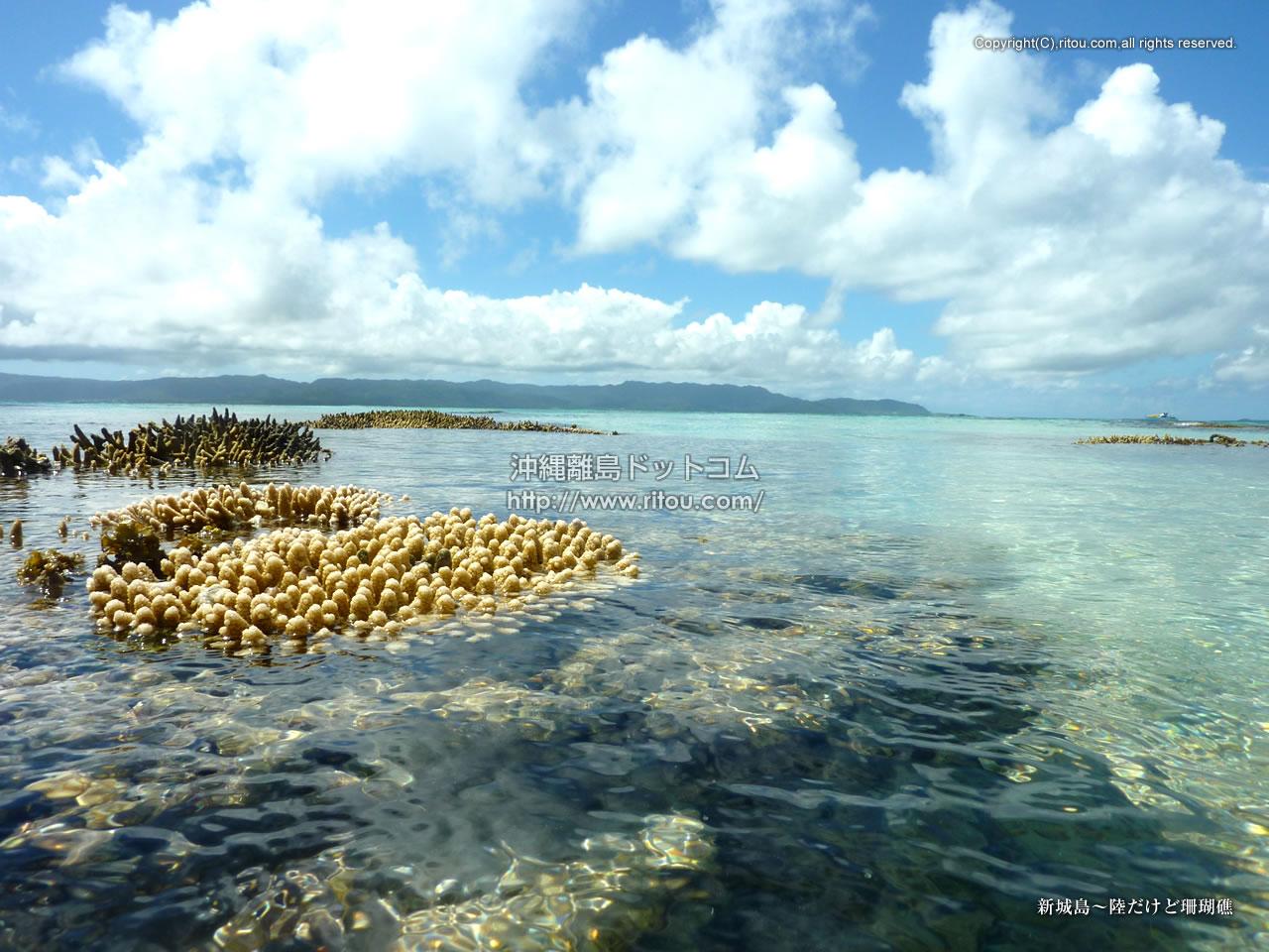 新城島〜陸だけど珊瑚礁