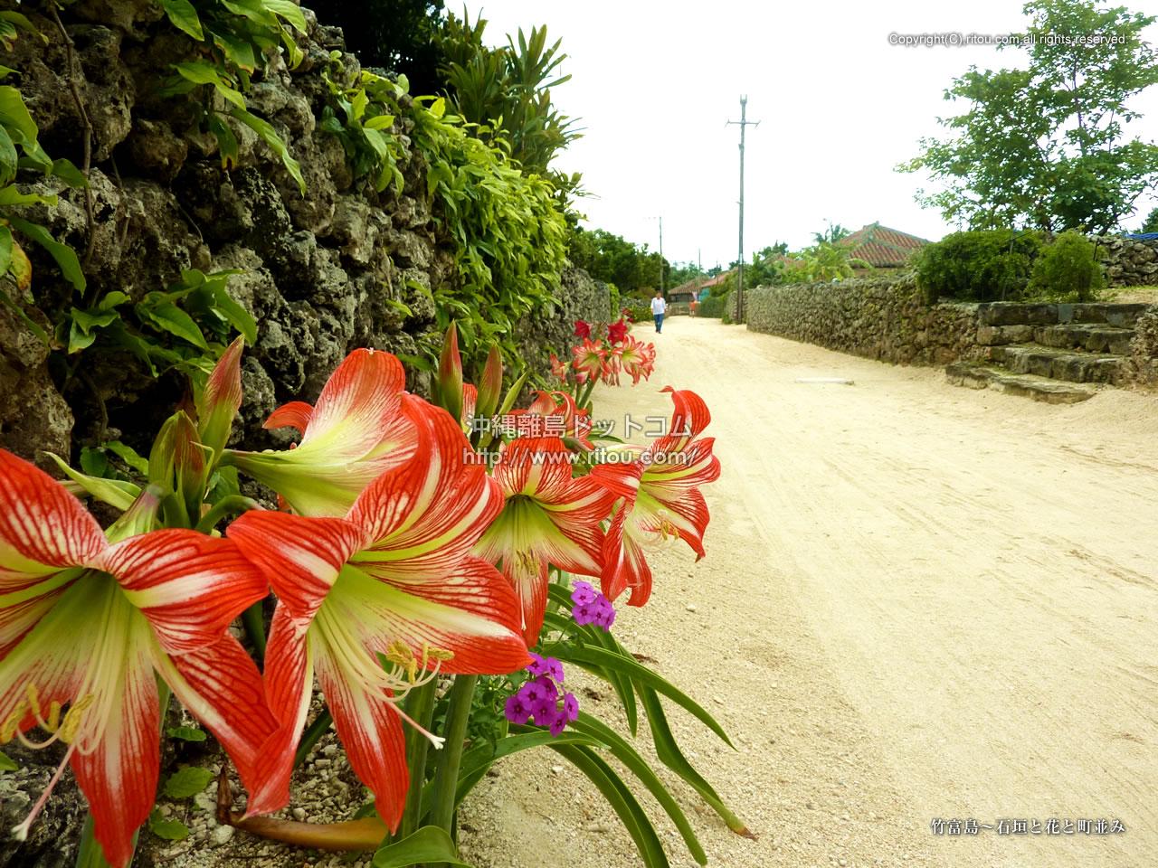 竹富島〜石垣と花と町並み
