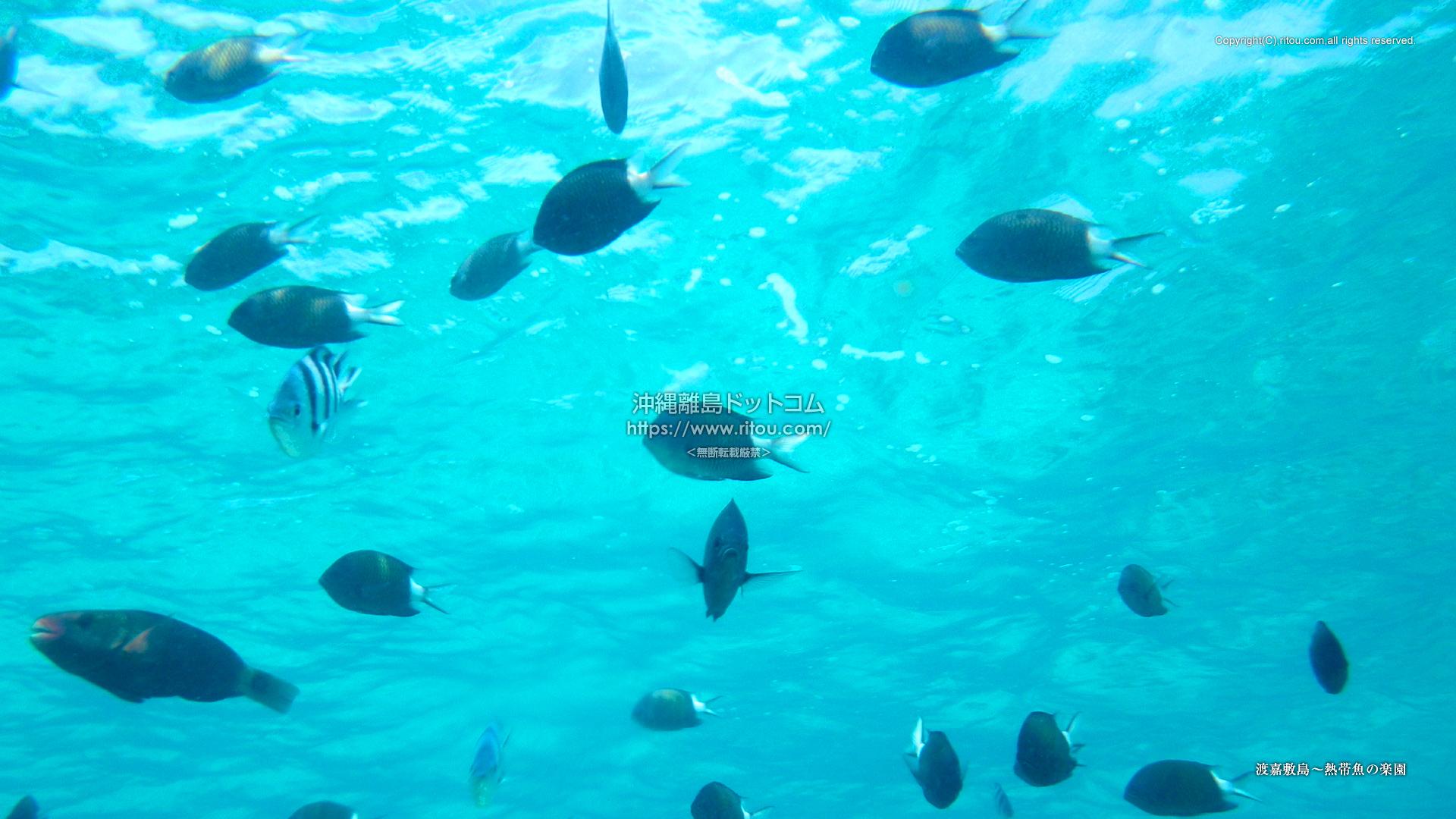 渡嘉敷島〜熱帯魚の楽園