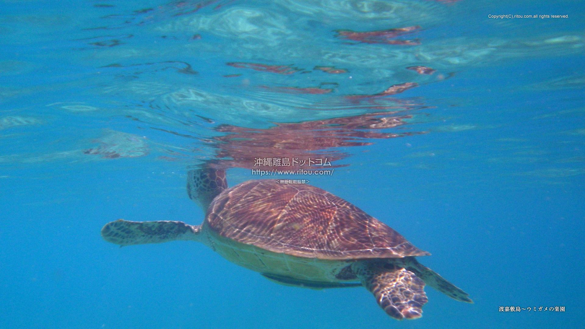 渡嘉敷島〜ウミガメの楽園