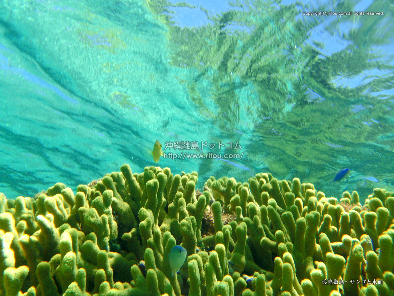 渡嘉敷島〜サンゴと水面