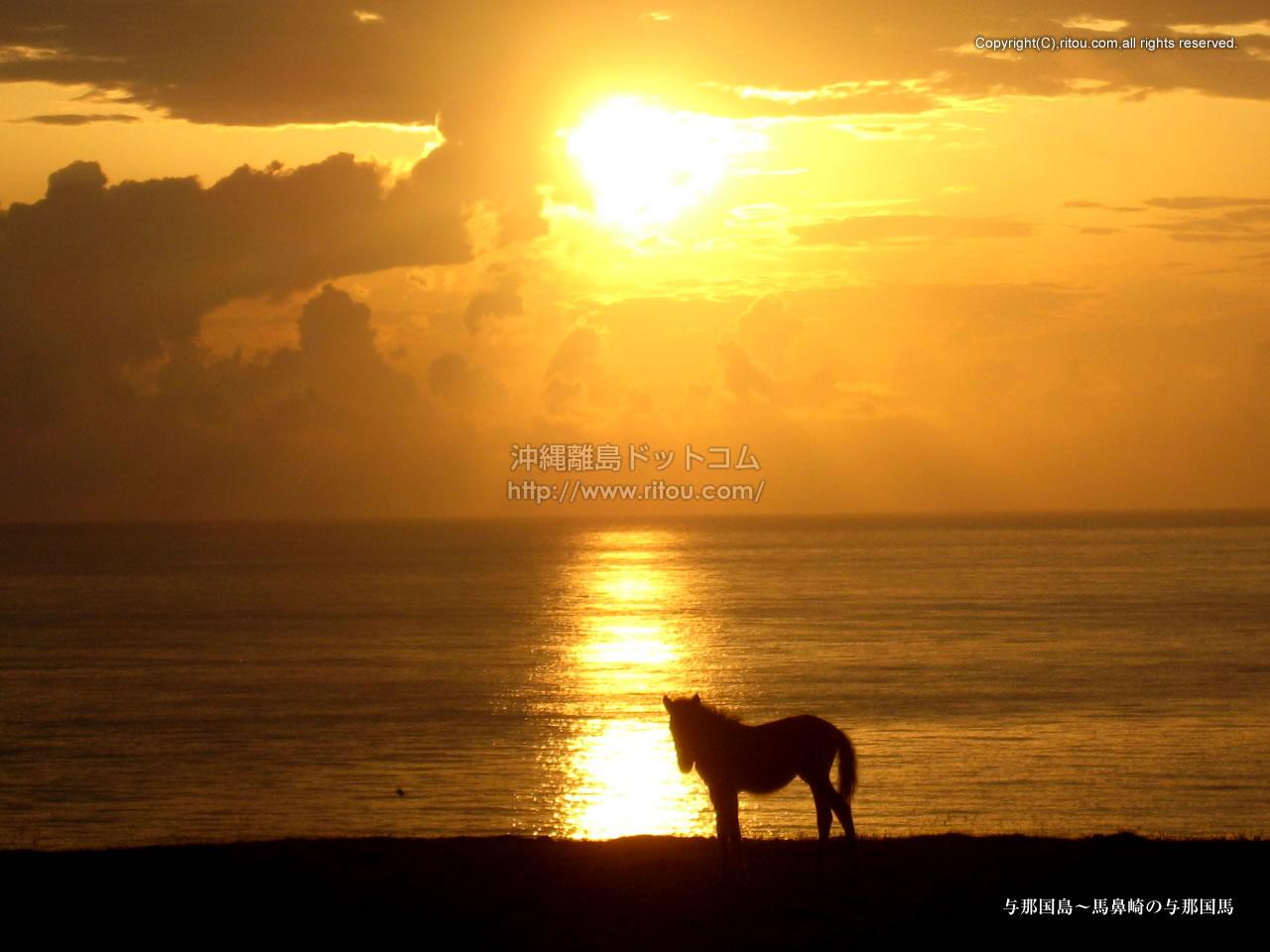 与那国島〜馬鼻崎の与那国馬