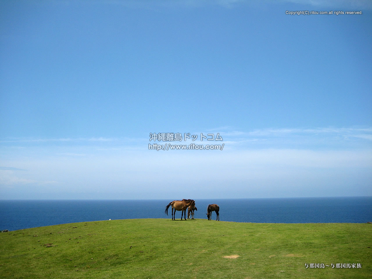 与那国島〜与那国馬家族