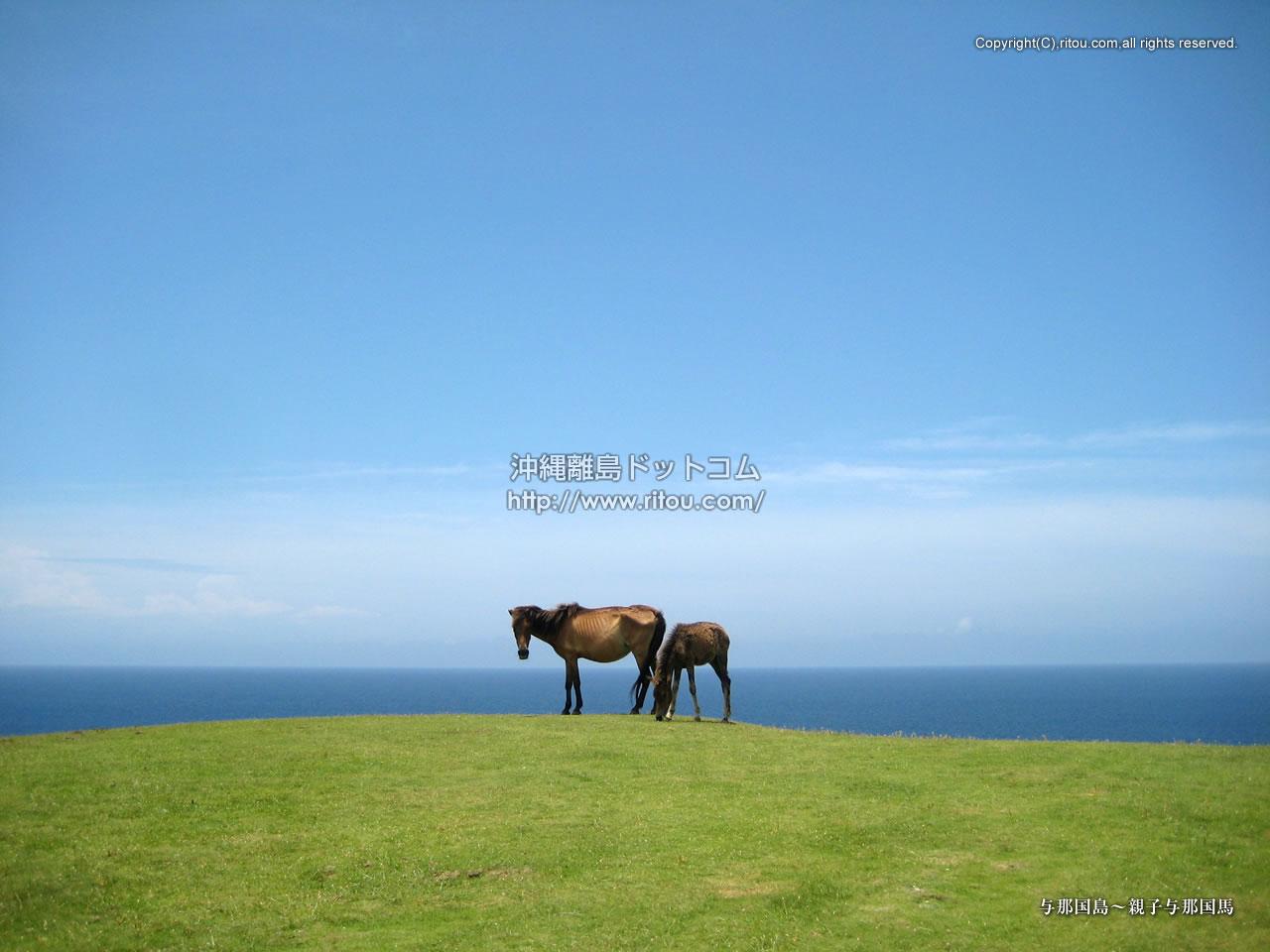 与那国島〜親子与那国馬