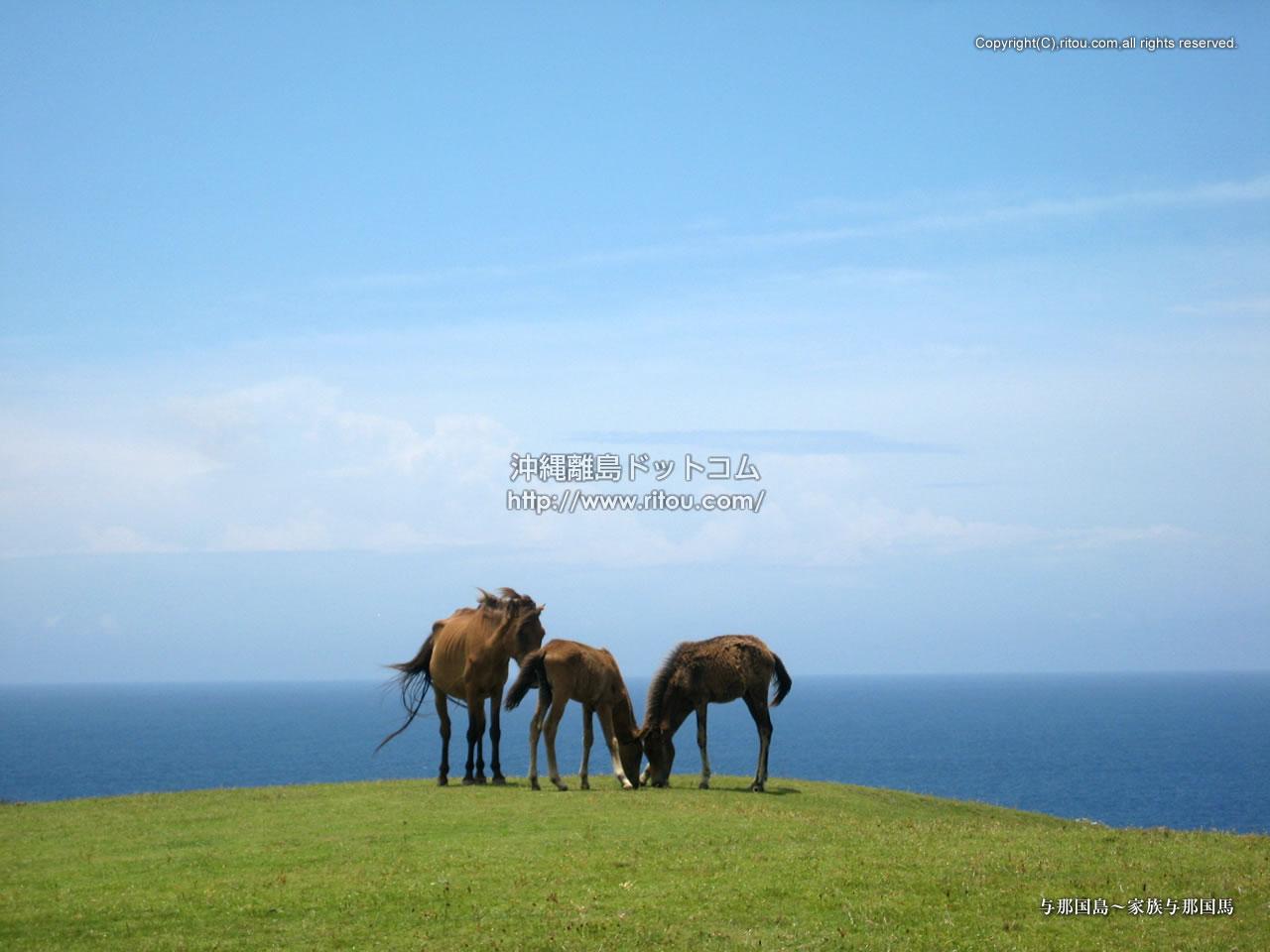 与那国島〜家族与那国馬