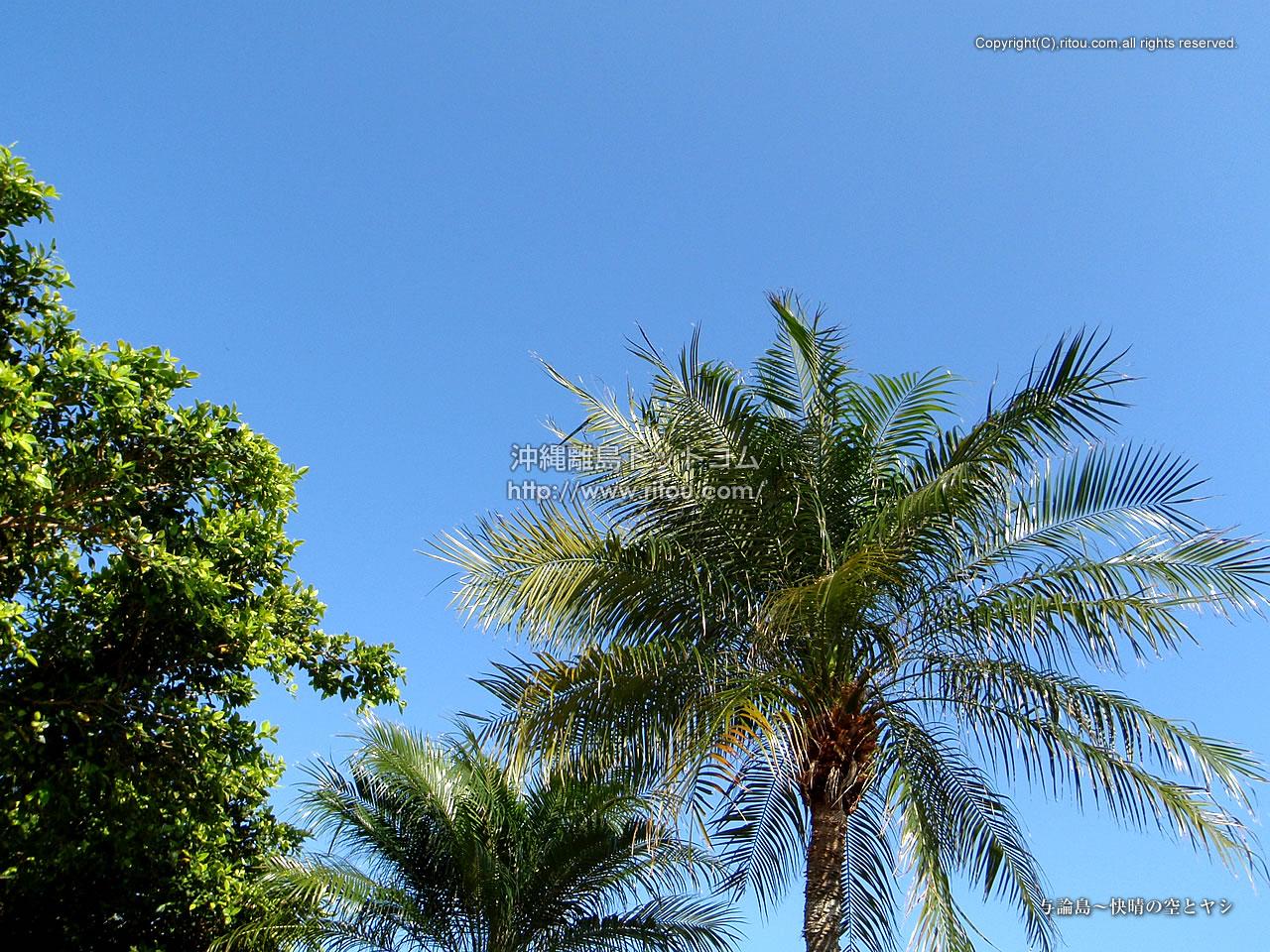 与論島〜快晴の空とヤシ