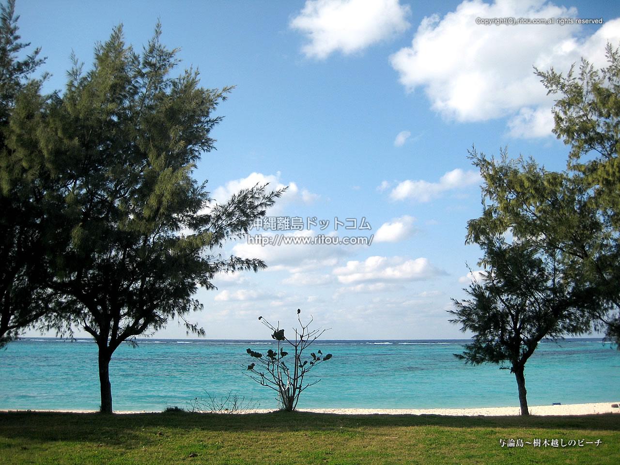 与論島〜樹木越しのビーチ