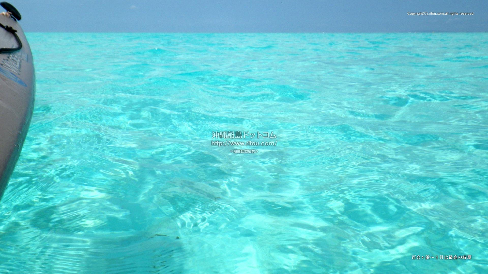 百合ヶ浜〜4月は最高の時期