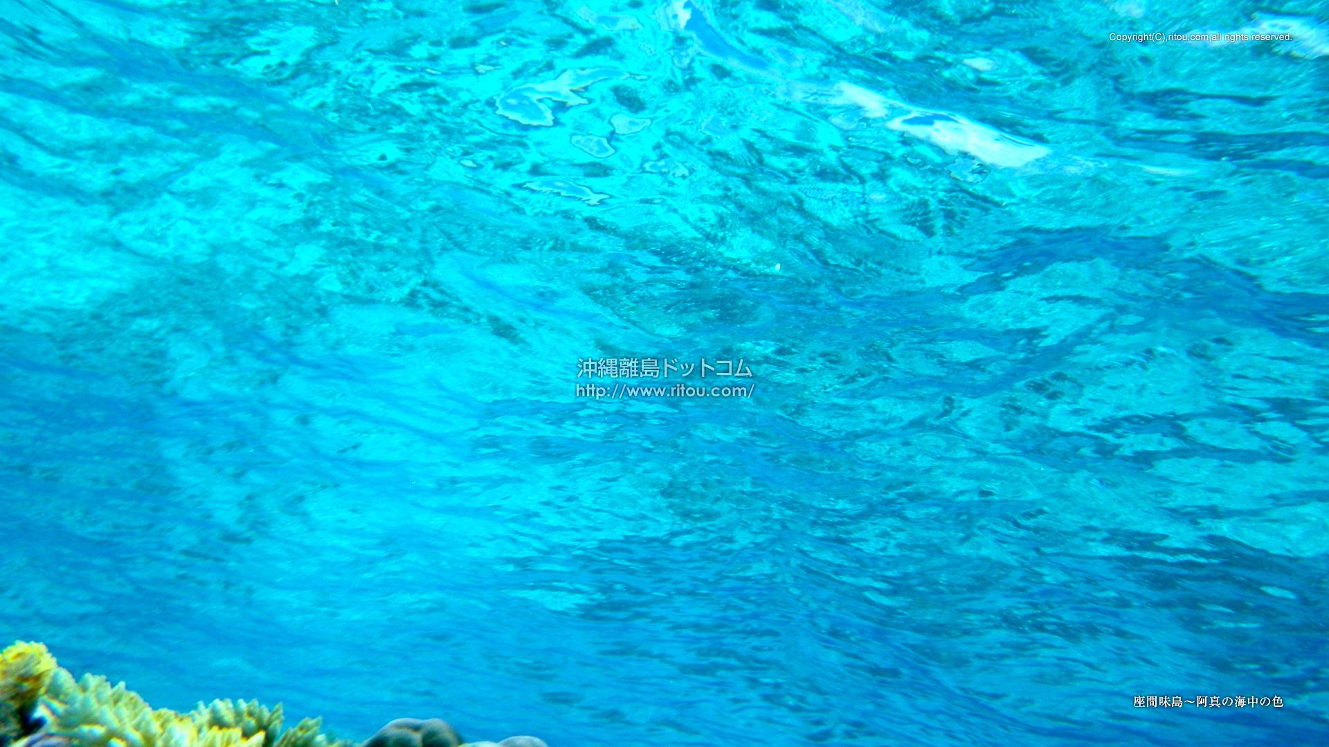 座間味島〜阿真の海中の色