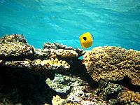 嘉比島の嘉比南の海の中 - 起伏に富んだ岩礁が多い海