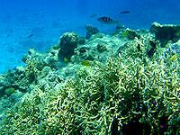 安室島の砂浜近くの海の中 - 小さいドロップオフには魚も多い