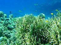 安室島の砂浜近くの海の中 - サンゴがとてもキレイです