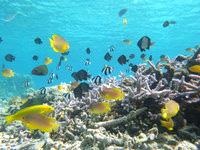 安慶名敷島の安慶名敷島の水中ベストスポット - 小魚ですが種類は多い