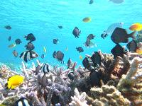 安慶名敷島の安慶名敷島の水中ベストスポット - サンゴも生き生きしていて自然のままの姿