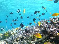 安慶名敷島の安慶名敷島の水中ベストスポット - この環境を守るために餌付けは厳禁!