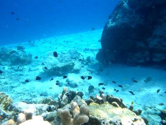 嘉比島の嘉比北西の海の中「海中の砂の坂の手前には魚も多いです」