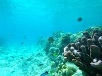 嘉比島の嘉比北西の海の中 - サンゴの根がいくつかあり魚も多い