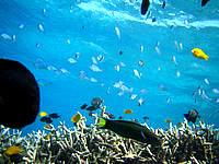 安慶名敷島の安慶名敷西の海の中1 - 餌付けされていて寄ってくる魚が怖い