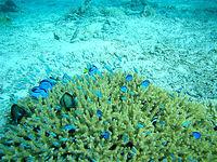 沖縄本島離島 安慶名敷島の安慶名敷西の海の中3の写真
